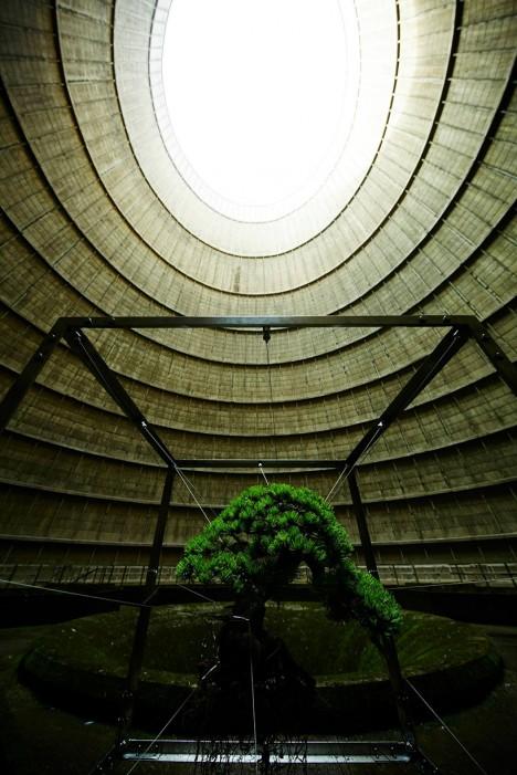 bonsai power plant 2