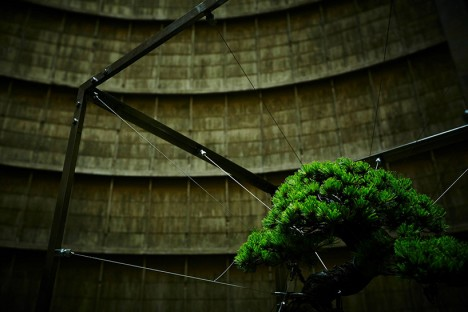 bonsai power plant 3