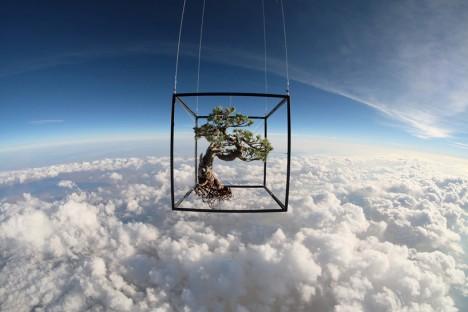 bonsai space