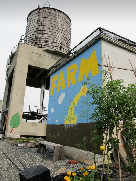 brooklyn farm top