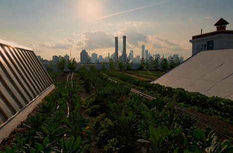 brooklyn roof top farms