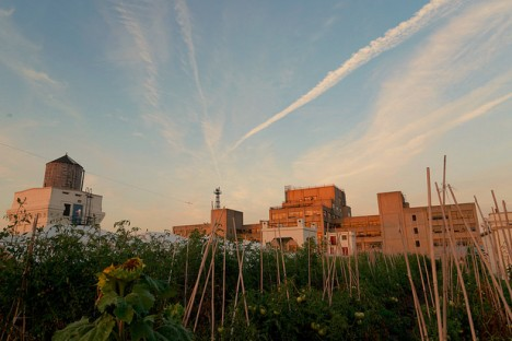brooklyn rooftop farm