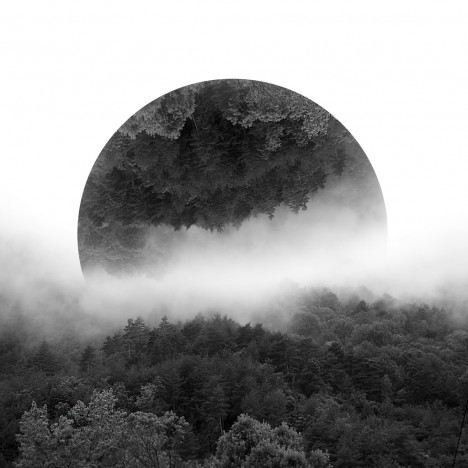 reflected black white trees