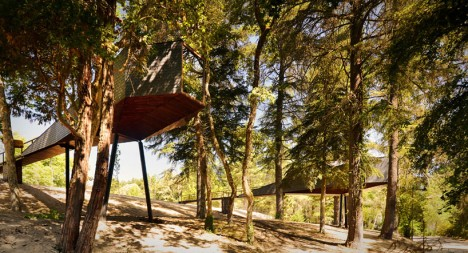 tree houses snake 1