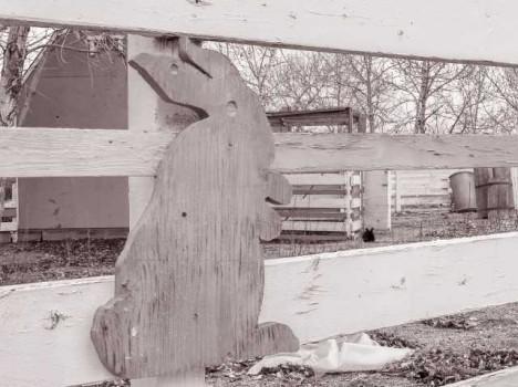 abandoned-petting-zoo-8c
