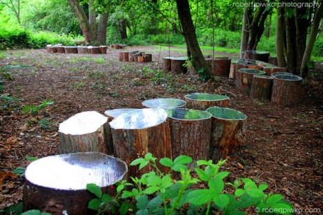 mirrors tree stumps 1