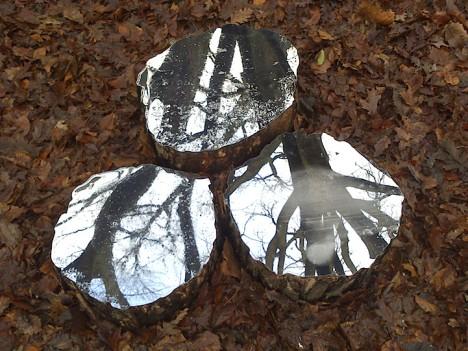 mirrors tree stumps 2