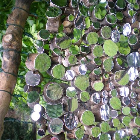 mirrors tree stumps 3