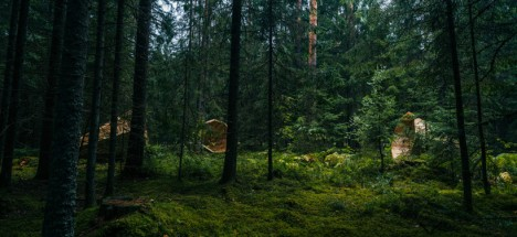forest sound project