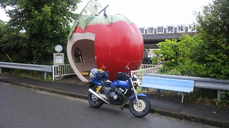 fruit-bus-stops-tomato-1a