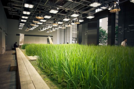 office rice paddy