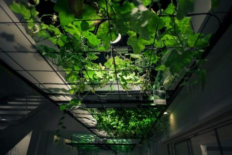 urban farm trellice