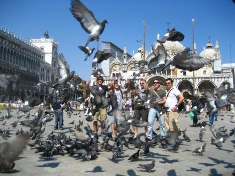 germiest-venice-pigeons-1