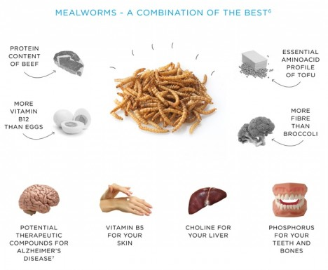 meal worm benefits