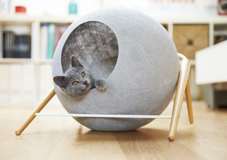 modernist cat observer