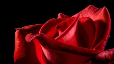 rose hacked