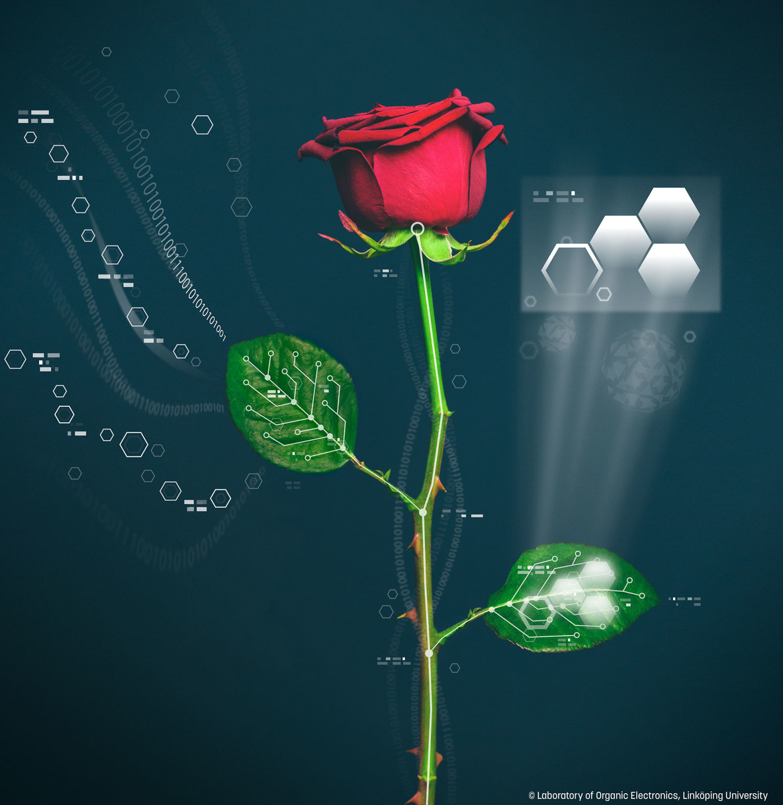 Power Plants: Scientists Grow Conductive Wires in Living Roses ...