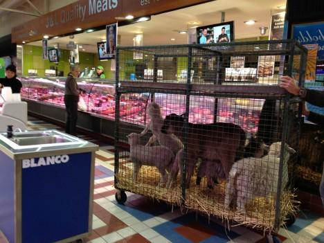 butcher-shops-14a