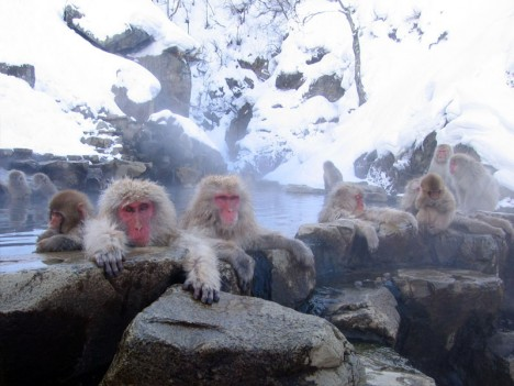 hot springs monkey 2