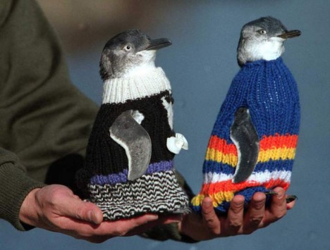 weird knits penguin sweaters 3