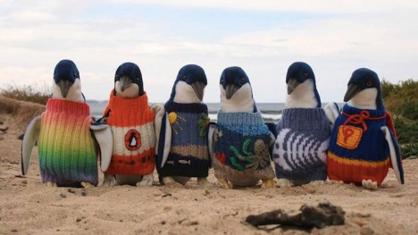weird knits penguin sweaters