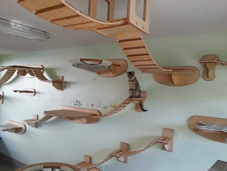 cat house ceiling 6