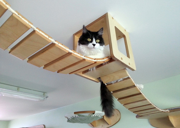 cat houses ceiling 2