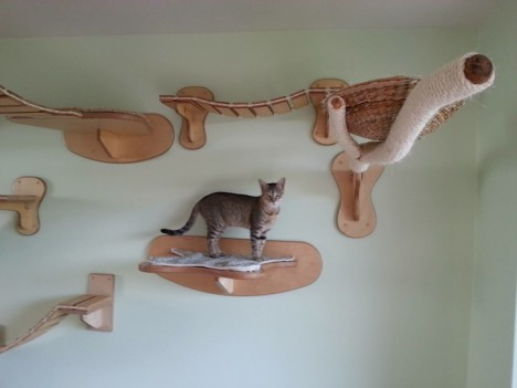 cat houses ceiling 4