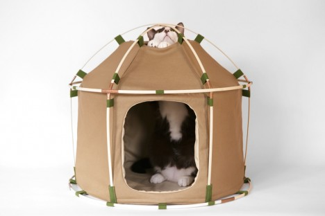 cat houses tent 1