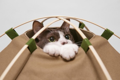 cat houses tent 2