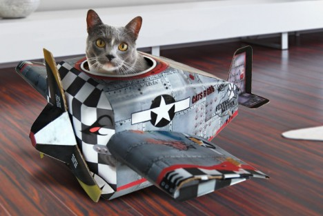 cat plane
