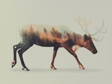 animal art double exp