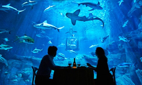 airbnb shark suite 4