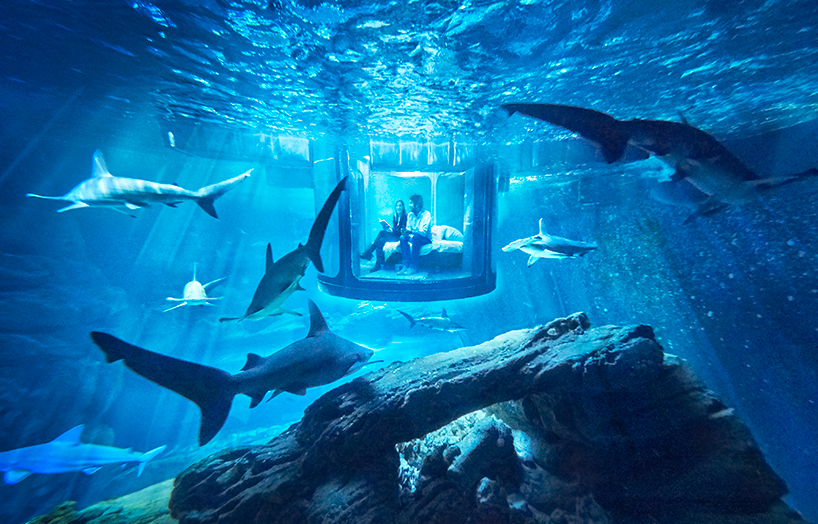 airbnb shark suite