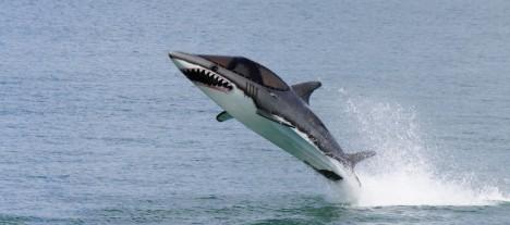 water sports seabreacher 2