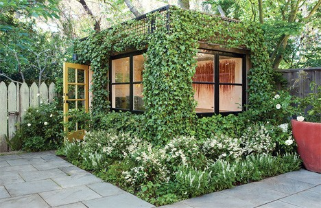 Home office backyard ivy