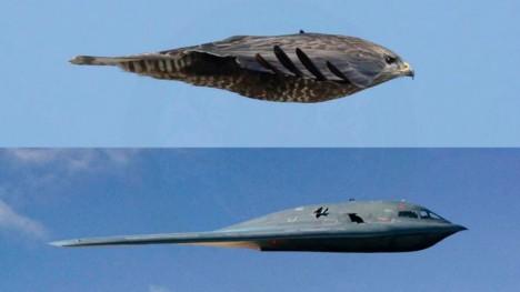 bird inspired b2 falcon