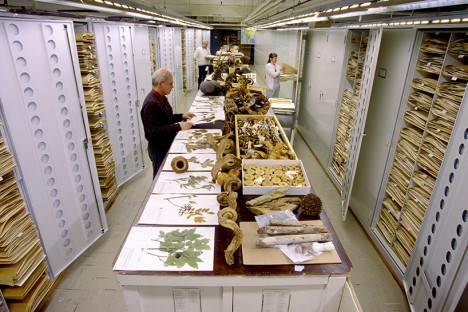 museum botany collection