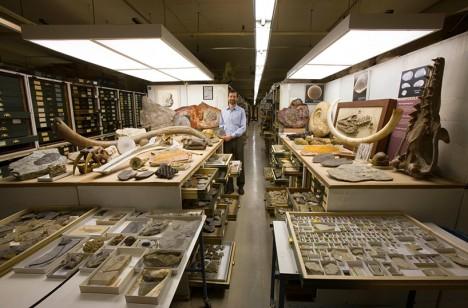 museum paleobiology