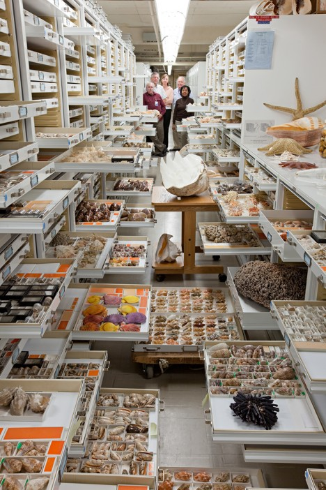 museum zoology collection