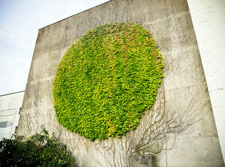 spy wall art botanical