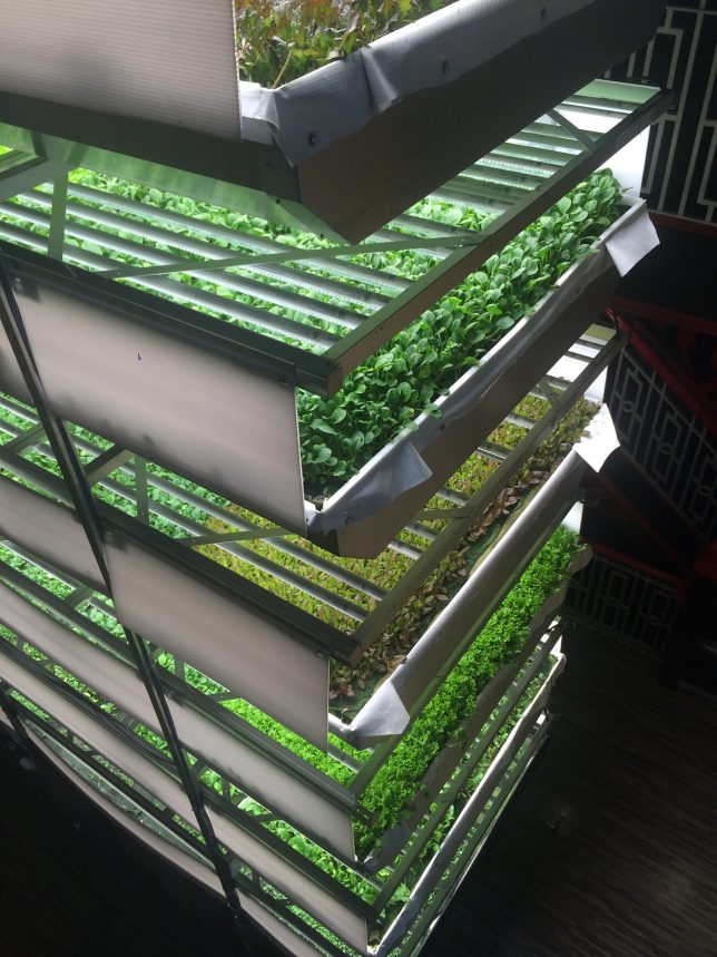 aerofarms shelves