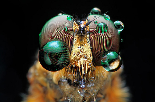 A New View: 65+ Illuminating Larger-Than-Life Macro Images