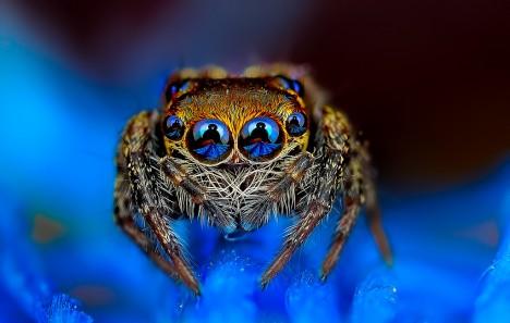 macro spider 1