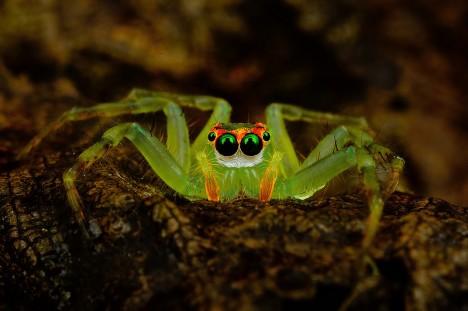 macro spider 3