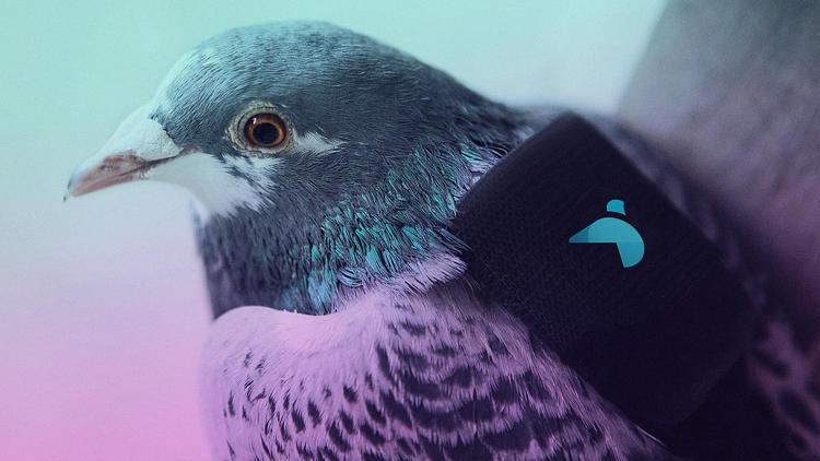 pigeon patrol 2