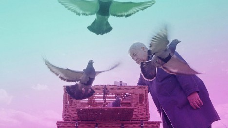 pigeon patrol 4