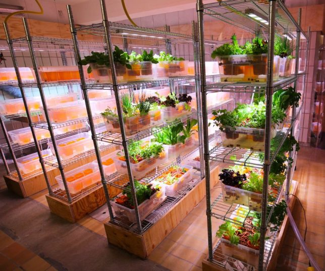 few customers realize that ikea is actually already one of the largest restaurant chains in the world selling over a billion euros of food annually - Ikea Indoor Garden