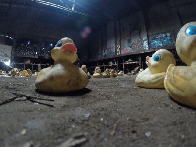 duck-factory-8c
