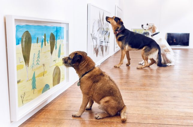 dog gallery wall art